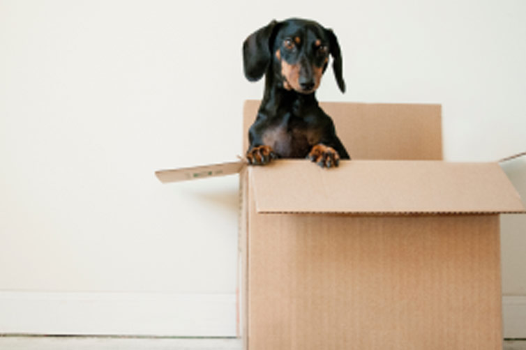Moving Your Pet Safely